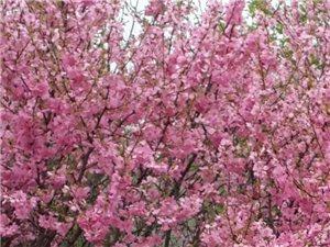 开春之日,花红之时