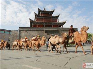 大型跨国仿古驼队重走丝绸之路途经酒泉