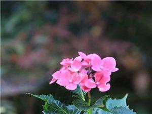 第一次学拍照,求支持。。。鲜花。。。