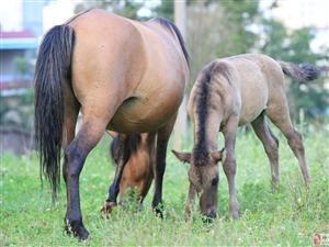 我拍的马,漂亮吧