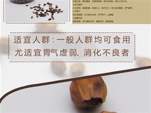 苦 丁茶招商加盟.18379531156  小苏