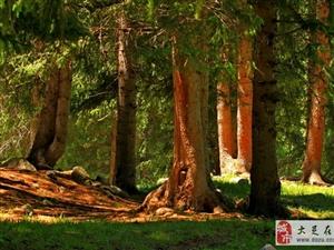 �c森林同在,且行且珍惜