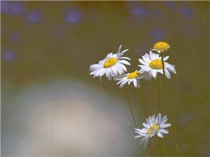 晨光里的花们