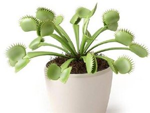 你造吗?这些盆栽能让卫生间风水更好