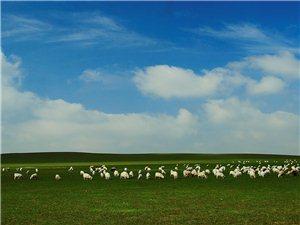 大�让芍�扎�特山地草原(牛羊�M山坡)