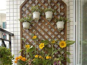 阳台上的小花园