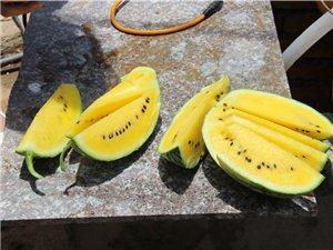 【魅力明光之旅专题】西瓜正当时:古沛镇精品西瓜种植基地吃货之行
