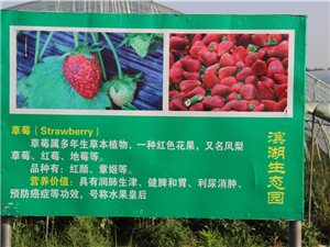 【魅力明光之旅专题】完结篇―蟠桃大会:明光滨湖生态农业科技示范园欢乐行