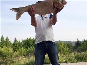 看看这鱼多少斤?