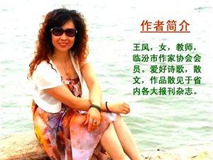 远方,那片胡杨林(作者:王凤)