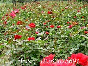 �G化苗木,花卉,