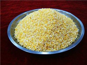1号糯玉米糁