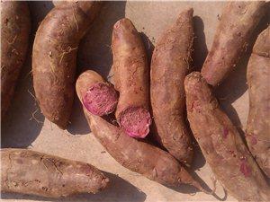 出售好種好吃好看好銷的紫薯苗