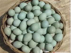 散养黑凤凰柴鸡蛋