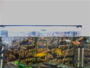 出售鱼缸和三湖鱼