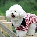 昨天在江夏體育館丟失卷毛比雄犬