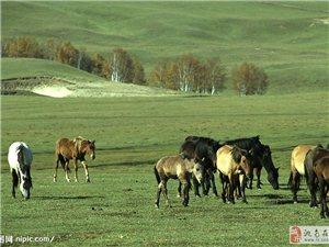 通榆縣邊界有草原出賣或出租