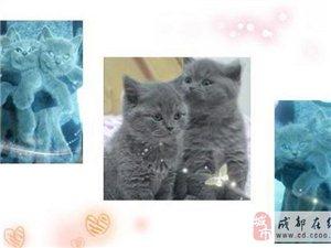 一大波小蓝猫儿等你来抱