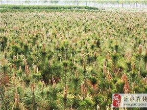 哪種苗木綠化效果好