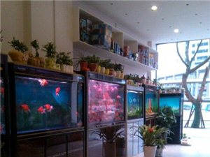 銅梁盛隆觀賞魚