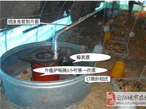重庆自生源禽业免费提供养殖技术指导及资料