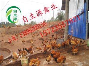 重庆梁平自生源禽业常年供应土鸡苗