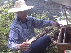 海南土蜂蜜