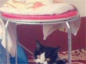免费赠送猫咪一只