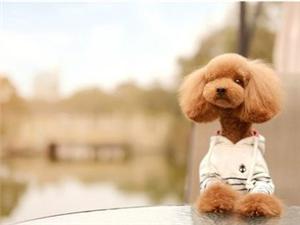 随便一个红包带走狗狗吧,狗狗很可爱,有缘送您
