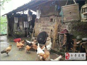 凈之泉凈水機新蔡誠招各鄉鎮代理