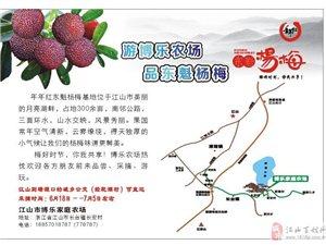 采楊梅   游博樂農場  (6.18至7.5)