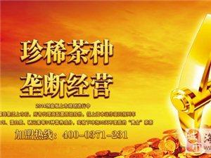 中国神茶耀舜金叶茶诚邀您的加盟