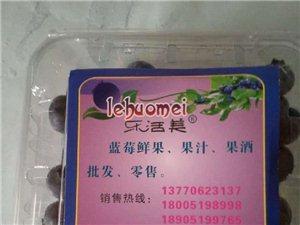 """南京""""樂活美""""藍莓專業合作社現大量出售新鮮藍莓"""