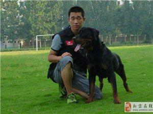 新密小魏专业从事家庭宠物犬训练不良行为纠正