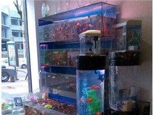 銅梁盛隆觀賞魚 - 1元