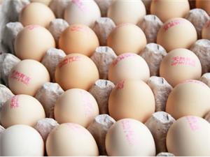 出售有機雞蛋營養雞蛋