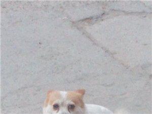 谁家小狗丢了?快来领走。