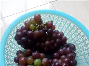 优质葡萄批发出售