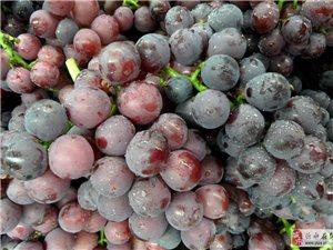 大量巨峰葡萄預售幾十萬斤
