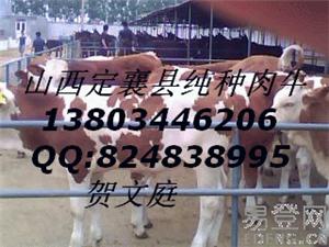 肉牛养殖致富快选肉牛到山西八一牧业