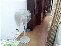 南安仑苍镇转让电风扇,电磁炉和电饭煲