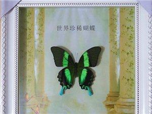 楊凌蝴蝶工藝品