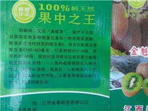 奉新獼猴桃基地歡迎采摘