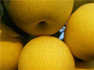 大量安果梨批發