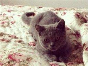 因个人问题无法继续照顾猫咪