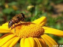 售自家养蜂生产的天然纯蜂蜜、蜂王浆、蜂花粉等蜂产品