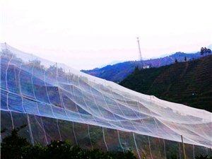 黄龙病果树隔离网