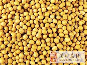 大量出售黃豆玉米看貨方便可送貨