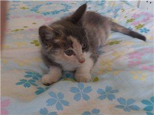 可爱的小猫咪领养啦!!