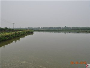 董市泰洲金龍村14畝魚塘出租出售